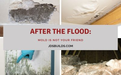 After the Flood: Mold is NOT your Friend