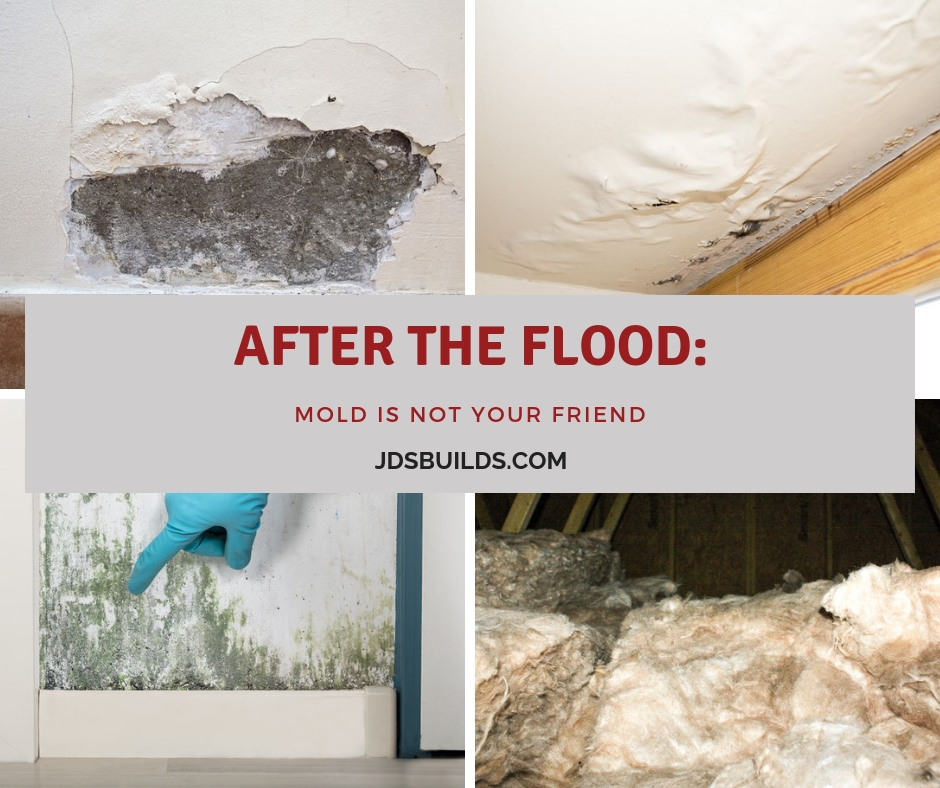 Water damage in your home or business is a problem, mold can be worse for the structure, people, and pets.
