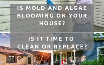 How to Prevent and Repair Mold and Algae on Siding